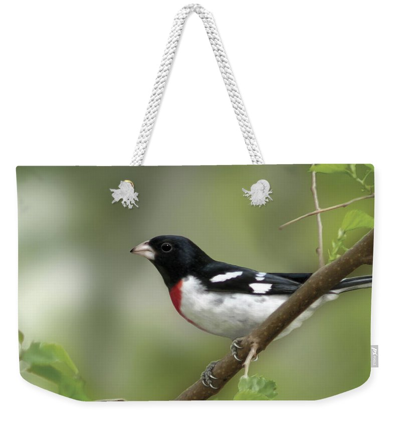 Nature Weekender Tote Bag featuring the digital art Rose Breasted Grosbeak by Barbara Hymer