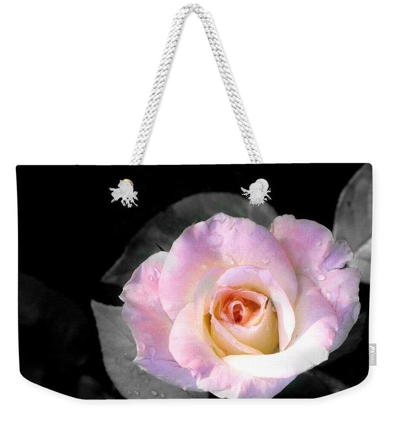 Princess Diana Rose Weekender Tote Bag featuring the photograph Rose Emergance by Steve Karol
