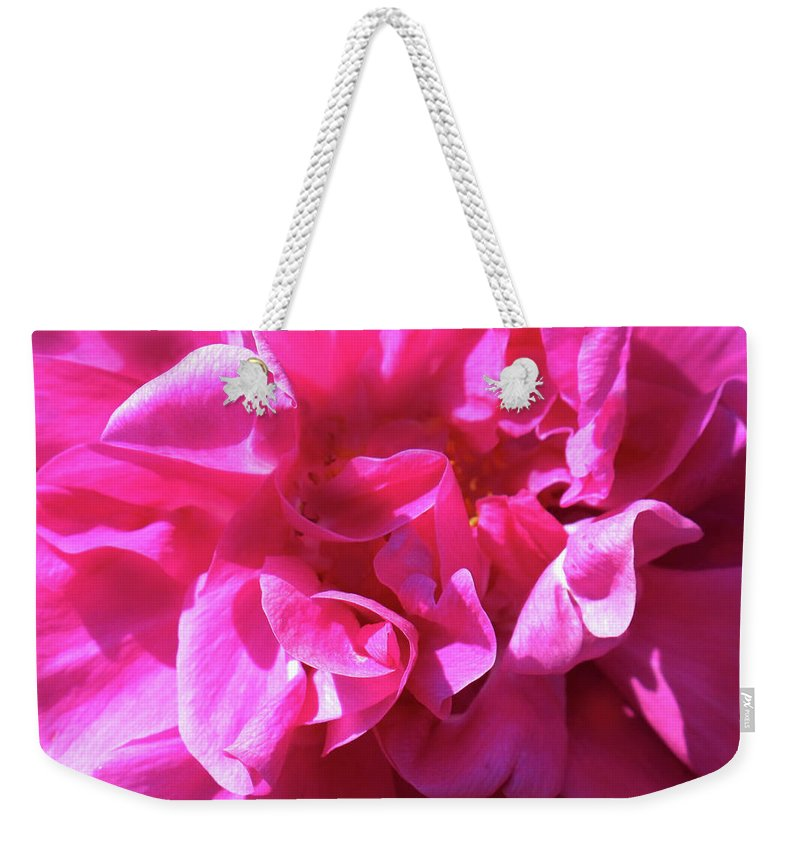 Rose Weekender Tote Bag featuring the photograph Rose Explosion by Ian MacDonald