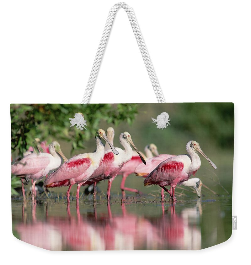 00171421 Weekender Tote Bag featuring the photograph Roseate Spoonbill Flock Wading In Pond by Tim Fitzharris