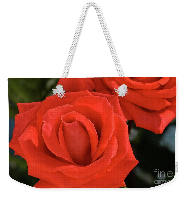 Rose Weekender Tote Bag featuring the photograph Roses-5814 by Gary Gingrich Galleries