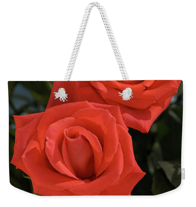 Rose Weekender Tote Bag featuring the photograph Roses-5840 by Gary Gingrich Galleries