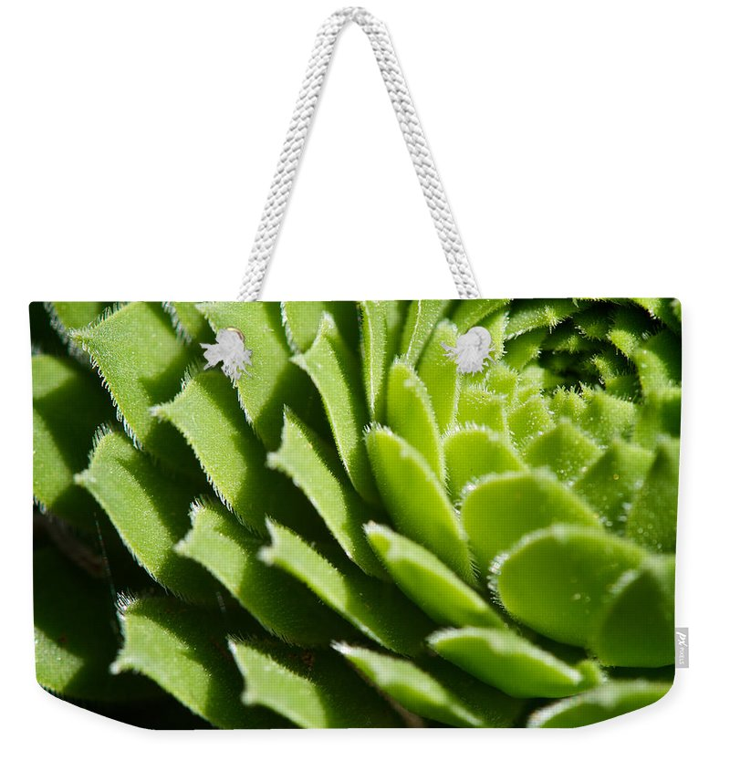 Hen And Chicks Weekender Tote Bag featuring the photograph Rosette by Lisa Knechtel