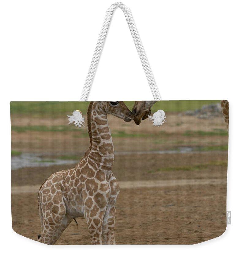 Rothschild Giraffe Weekender Tote Bags