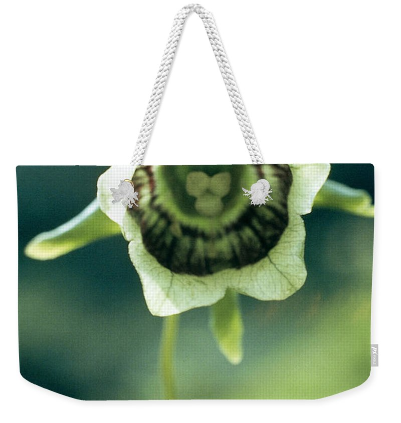 Roundleaf Asiabell Weekender Tote Bag featuring the photograph Roundleaf Asiabell by American School