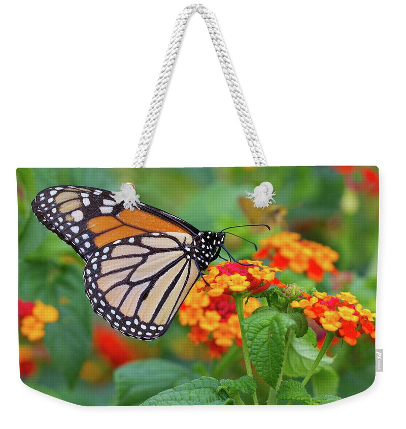 Butterfly Weekender Tote Bag featuring the photograph Royal Butterfly by Shelley Neff
