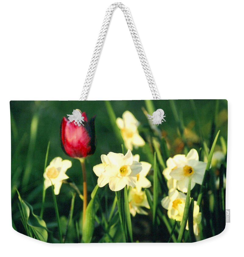 Tulips Weekender Tote Bag featuring the photograph Royal Spring by Steve Karol