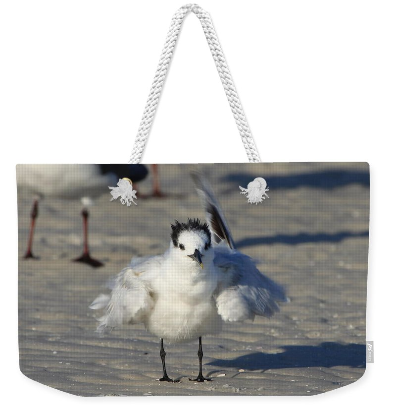 Gull Tern Weekender Tote Bag featuring the photograph Ruffled Feathers by Barbara Bowen