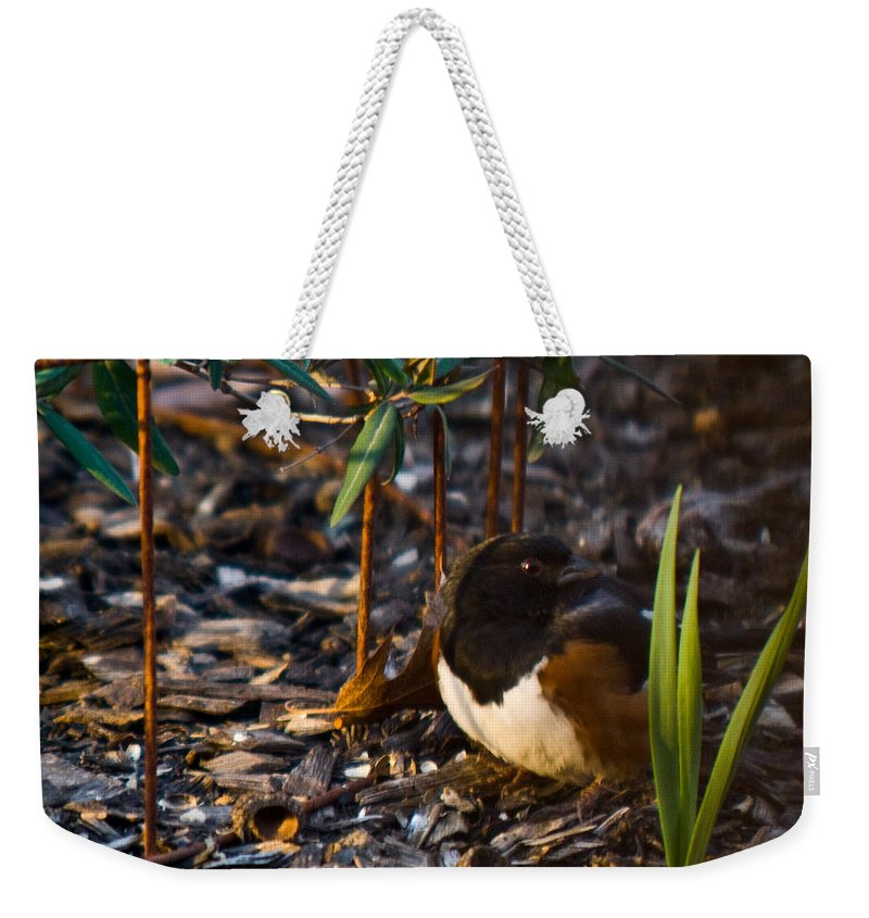 Cumberand Weekender Tote Bag featuring the photograph Rufous Sided Towhee At A Glance by Douglas Barnett