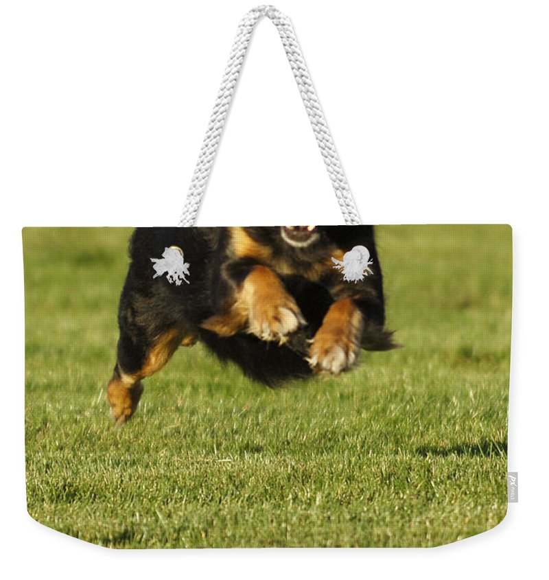 Pet Weekender Tote Bag featuring the photograph Run Dog Run by Jill Reger