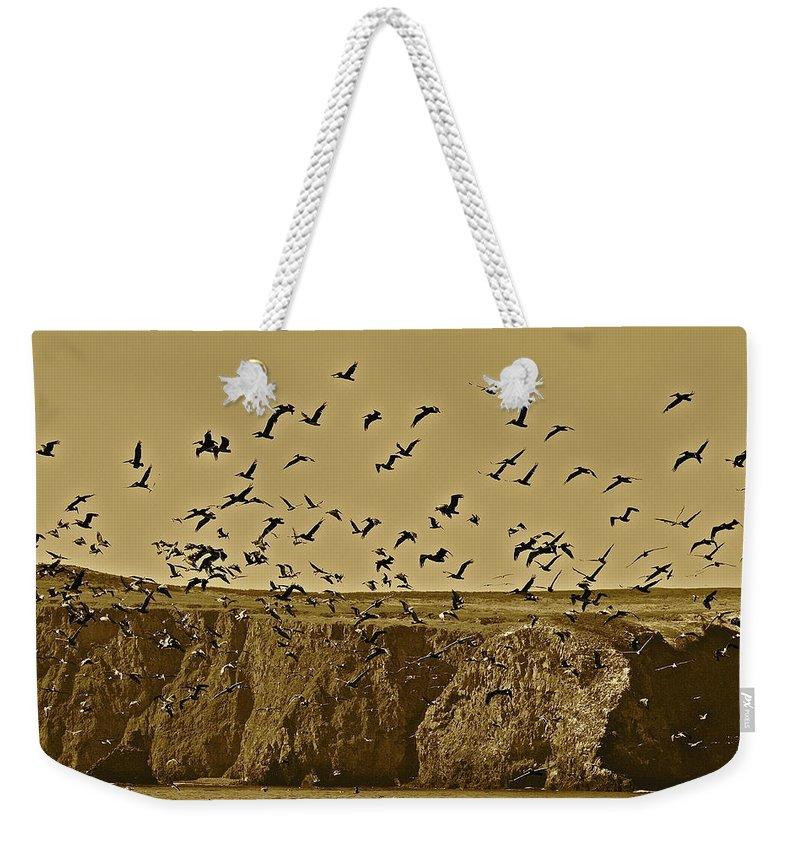 Birds Weekender Tote Bag featuring the photograph Run For Cover by Diana Hatcher