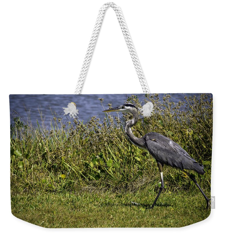 Bird Weekender Tote Bag featuring the photograph Running Away by Leticia Latocki