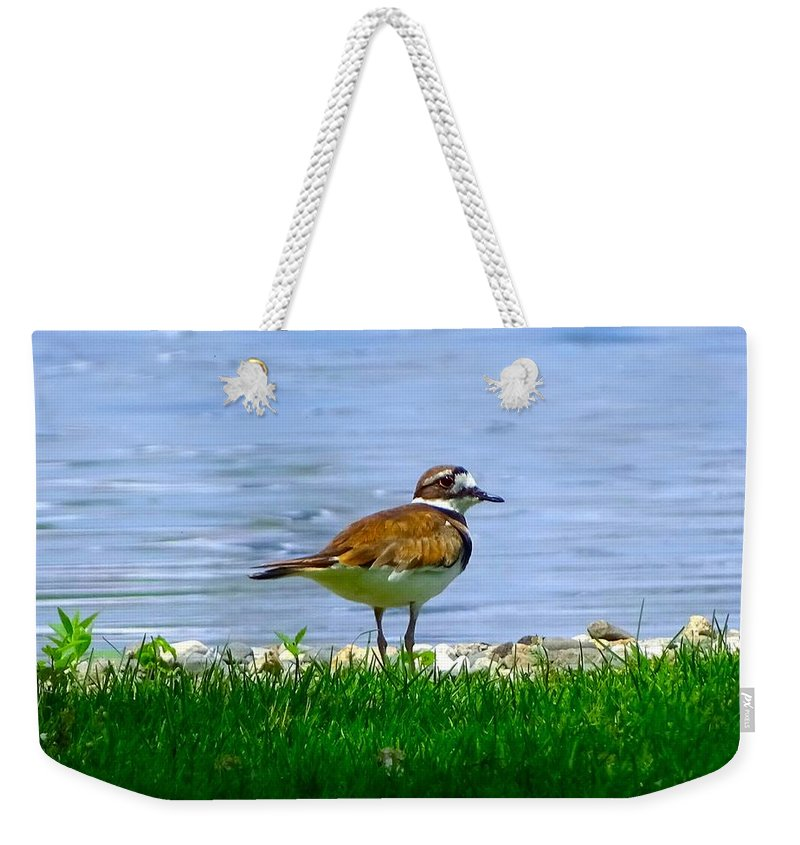 Bird Weekender Tote Bag featuring the photograph Sad Bird Near Pond by Lilia D