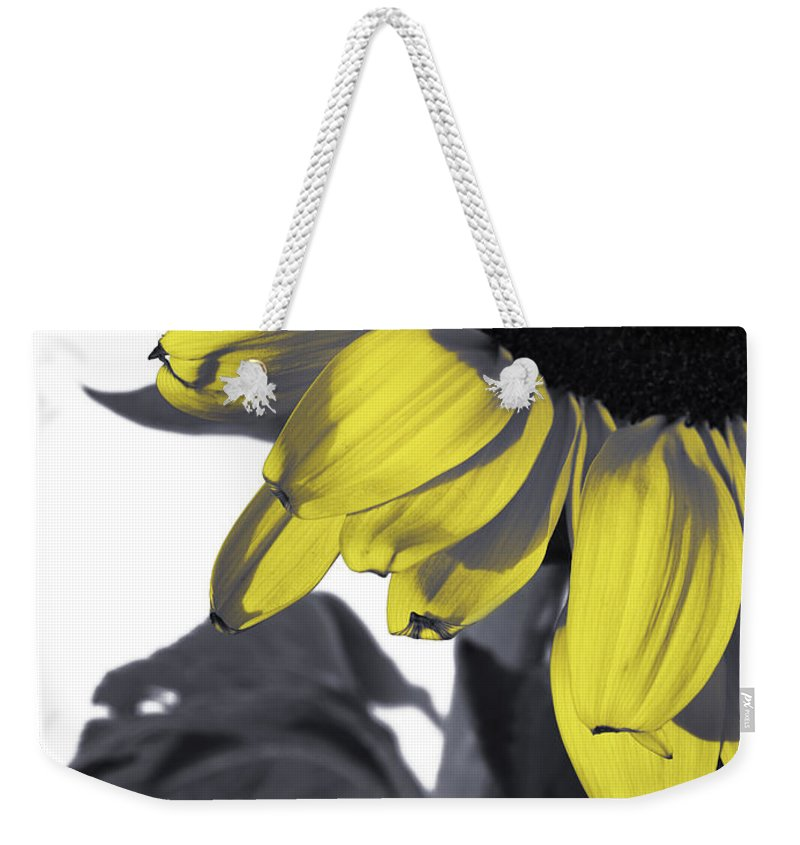 Sad Weekender Tote Bag featuring the photograph Sad Sunflower by Kelly Jade King