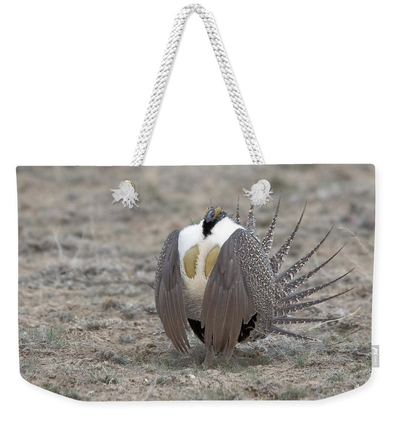 Grouse Weekender Tote Bag featuring the photograph Sage Grouse by Gary Beeler
