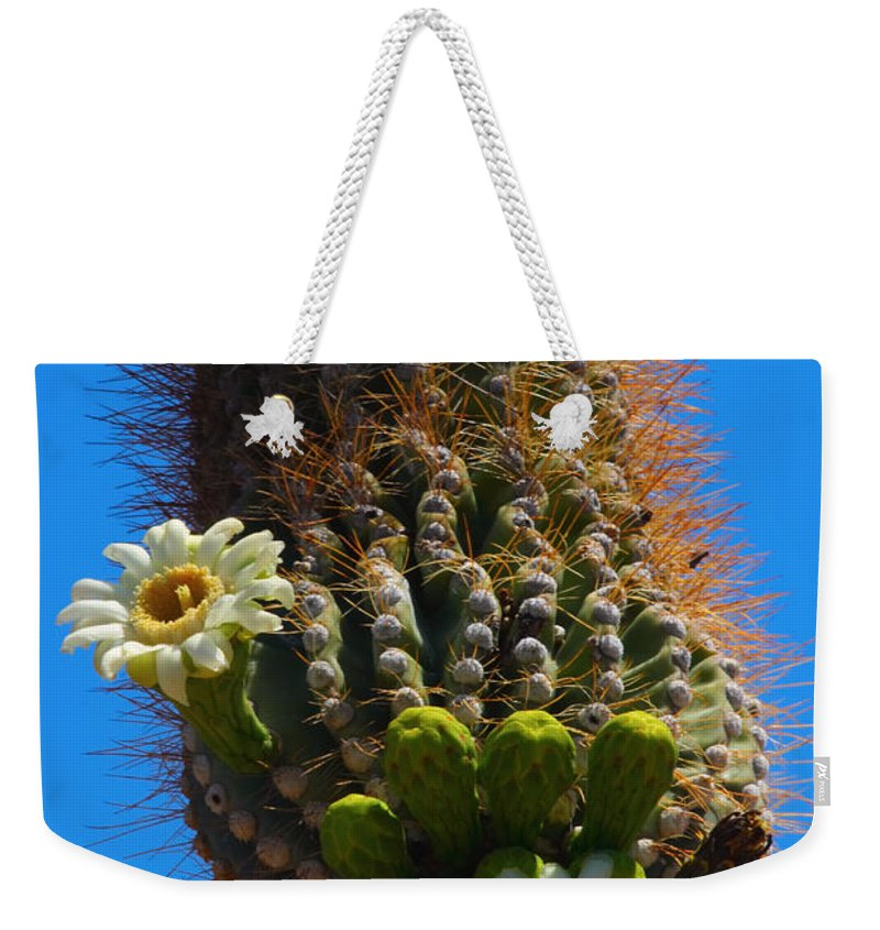 Saguaro Weekender Tote Bag featuring the photograph Saguaro Elephant Trunk by James BO Insogna