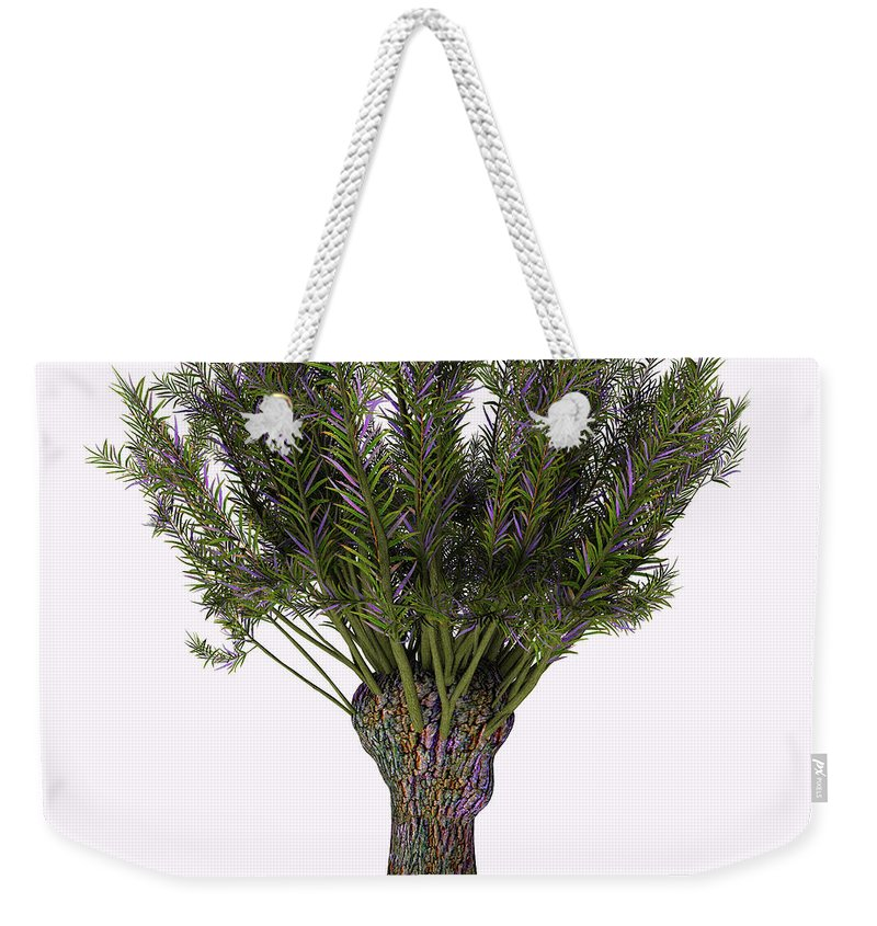 3d Illustration Weekender Tote Bag featuring the painting Salix Viminalis Tree by Corey Ford
