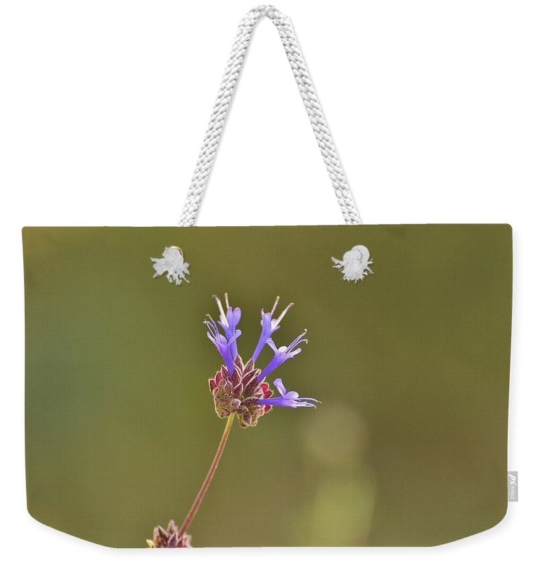 Linda Brody Weekender Tote Bag featuring the photograph Salvia Clevelandii II by Linda Brody