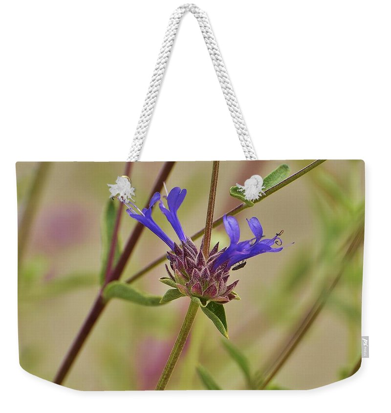 Linda Brody Weekender Tote Bag featuring the photograph Salvia Clevelandii IIi Closeup by Linda Brody