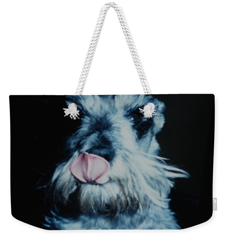 Dogs Weekender Tote Bag featuring the photograph Sam The Fat Cow by Rob Hans