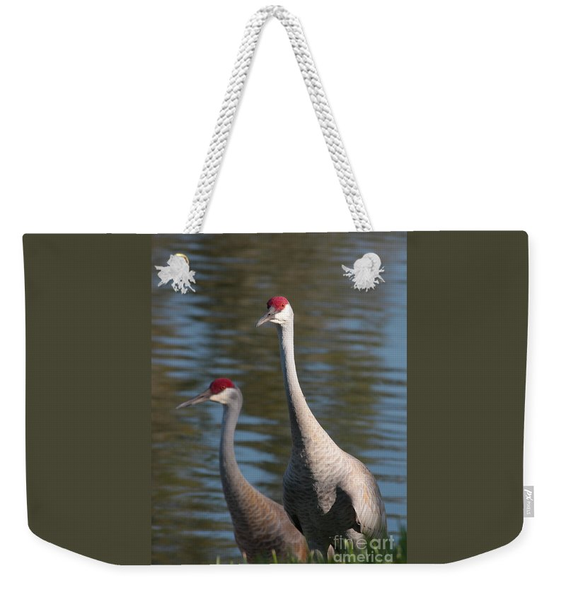 Sandhill Cranes Weekender Tote Bag featuring the photograph Sandhill Crane Couple By The Pond by Carol Groenen