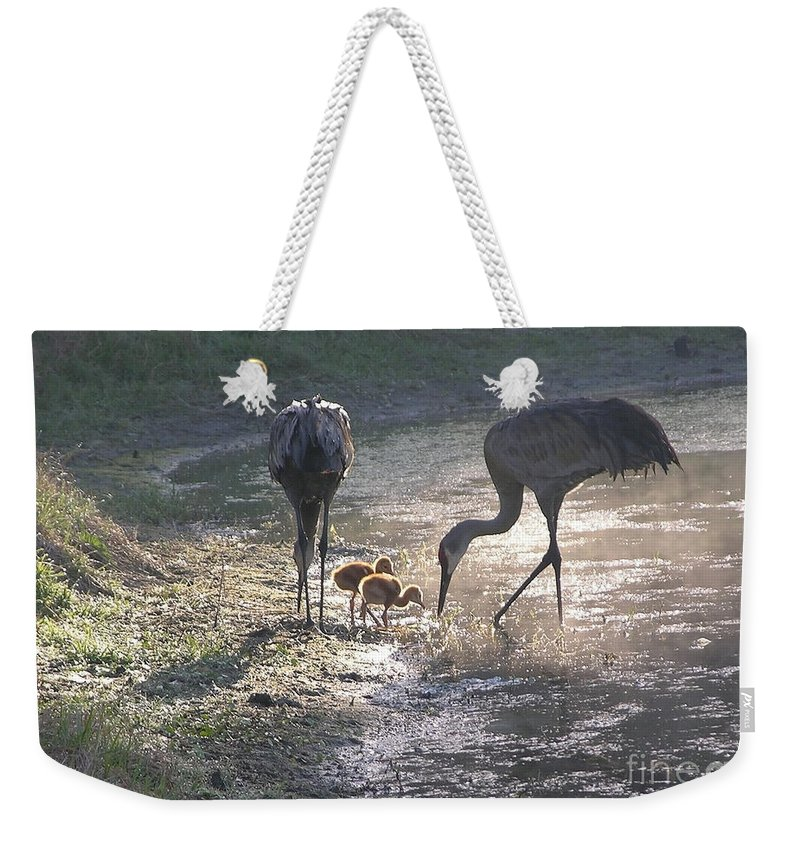 Sandhill Chick Weekender Tote Bag featuring the photograph Sandhill Crane Family In Morning Sunshine by Carol Groenen