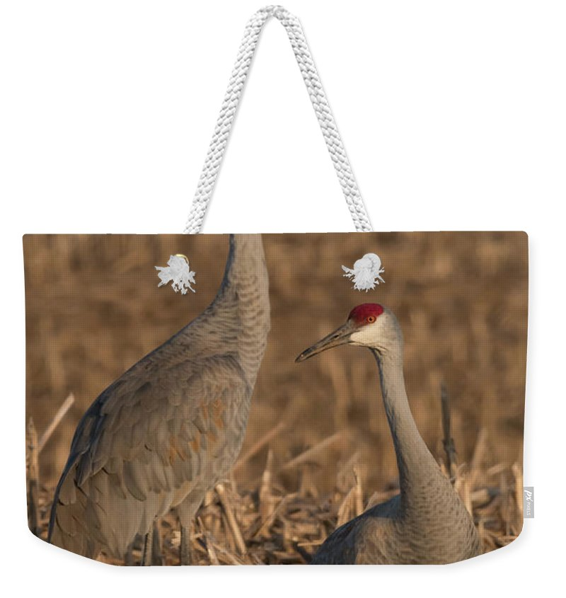 Sandhill Cranes Weekender Tote Bag featuring the photograph Sandhill Cranes On Watch by Dwain Patton