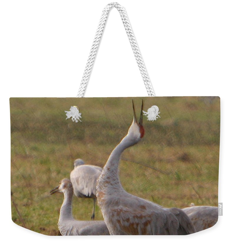 Sandhill Crane Birds Mating Calliing Nature Wildlife Photography Photograph Weekender Tote Bag featuring the photograph Sandhill Delight by Shari Jardina