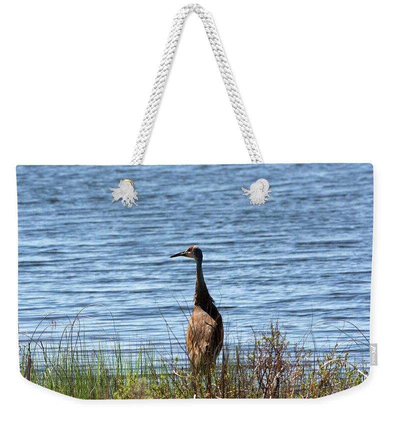 Sandhill Crane Weekender Tote Bag featuring the photograph Sandhill by Linda Kerkau