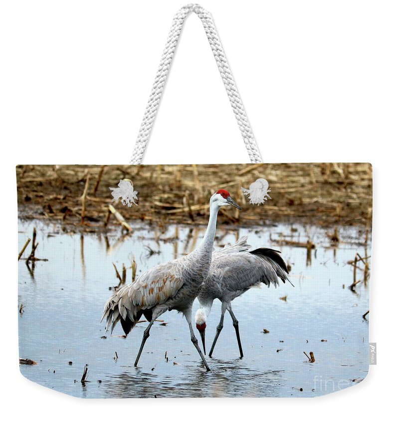 Sandhill Cranes Weekender Tote Bag featuring the photograph Sandhill Troublemaker by Carol Groenen