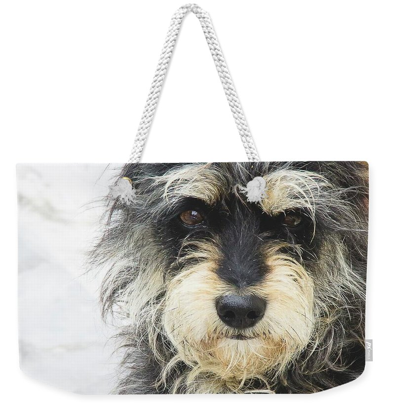 Dog Weekender Tote Bag featuring the photograph Santorini Dog by Debra Cox
