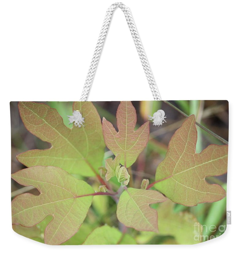 Nature Weekender Tote Bag featuring the photograph Sassafras by Brook Steed