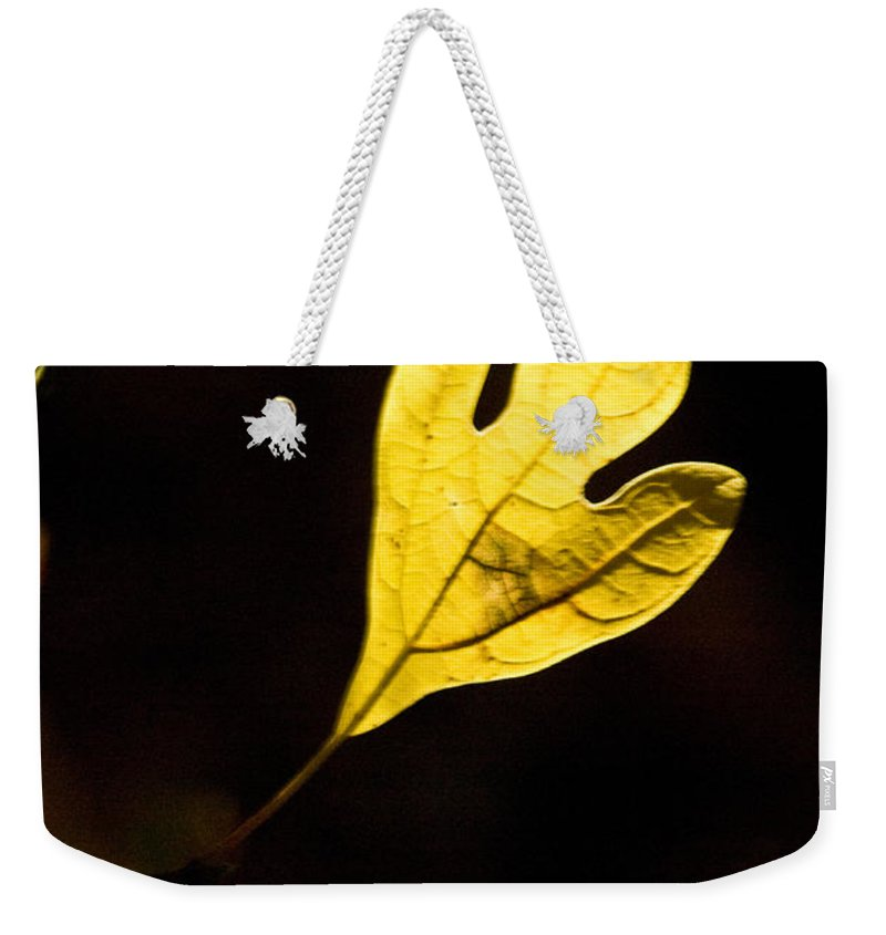 Sassafras Weekender Tote Bag featuring the photograph Sassafras Leaf Aglow by Douglas Barnett