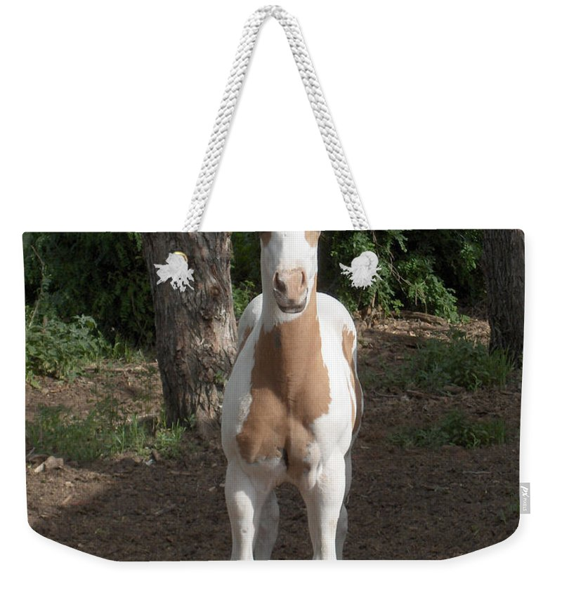 Horse Horses Colt Filly Mare Stallion Foal Ranch Farm Herd Paint Attitude Weekender Tote Bag featuring the photograph Sassy Filly by Andrea Lawrence