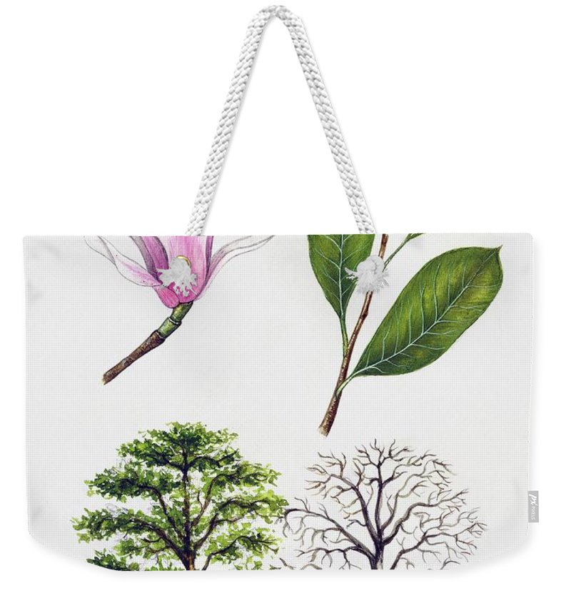 Magnolia Weekender Tote Bag featuring the painting Saucer Magnolia by Unknown