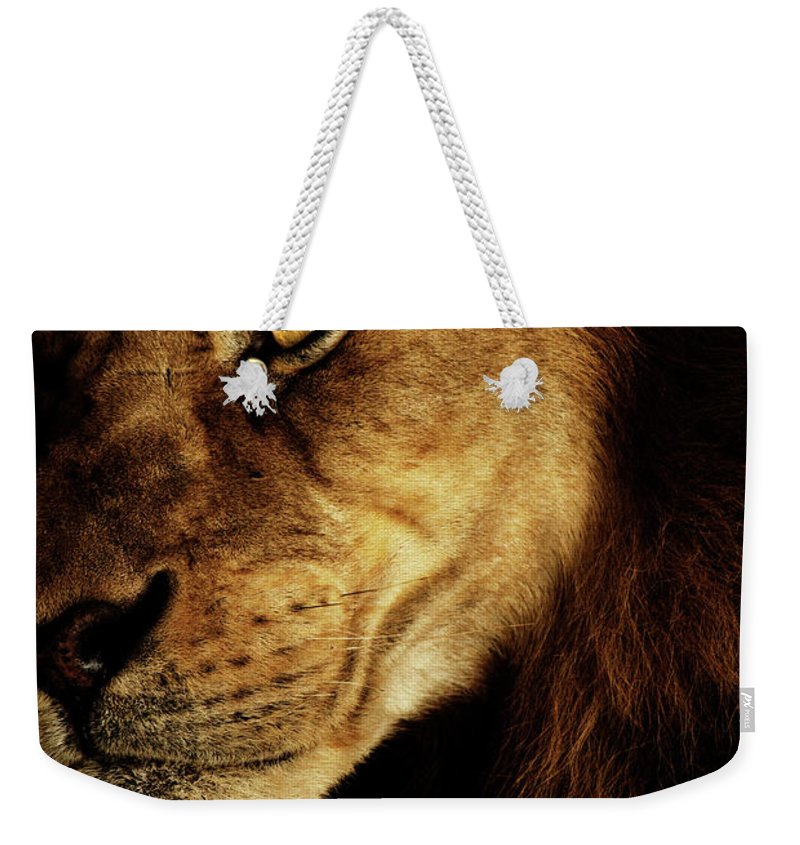 Lion Weekender Tote Bag featuring the photograph Savage by Andrew Paranavitana