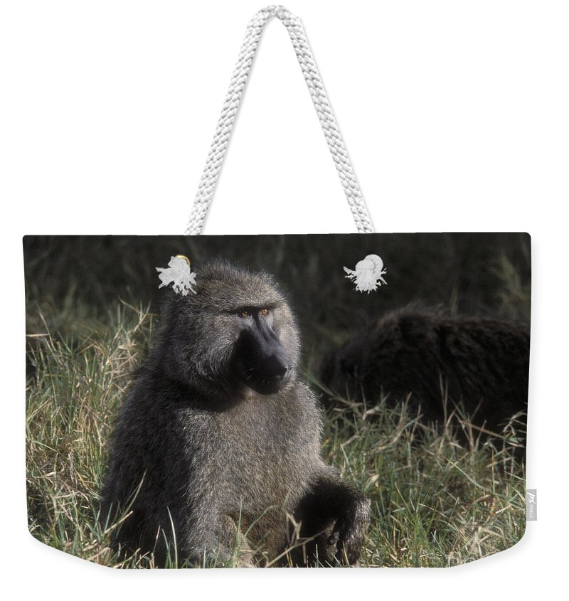 Baboon Weekender Tote Bag featuring the photograph Savannah Olive Baboon by Sandra Bronstein
