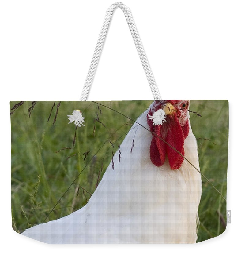 Rooster Farm Rural Chicken Bird White Red Curious Weekender Tote Bag featuring the photograph Say What by Andrei Shliakhau
