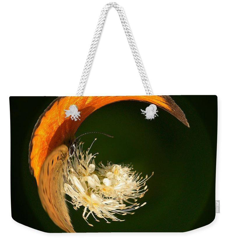 Lehtokukka Weekender Tote Bag featuring the photograph Scarce Copper 4 by Jouko Lehto