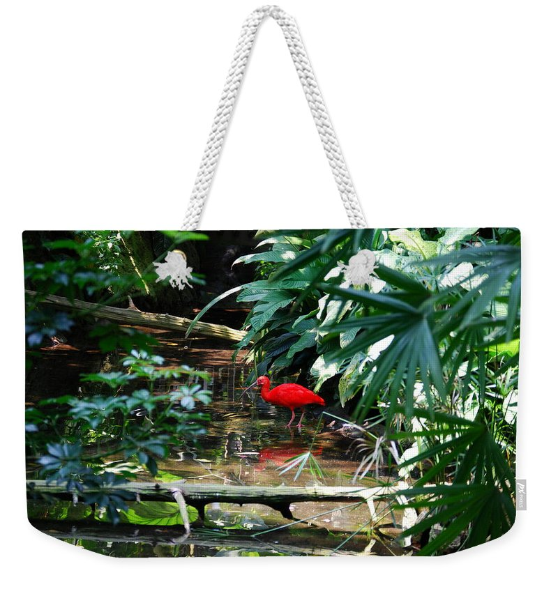 Scarlet Ibis Weekender Tote Bag featuring the photograph Scarlet Ibis by Eric Liller