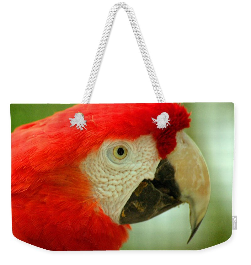 Parrot Weekender Tote Bag featuring the photograph Scarlett Macaw South America by Ralph A Ledergerber-Photography
