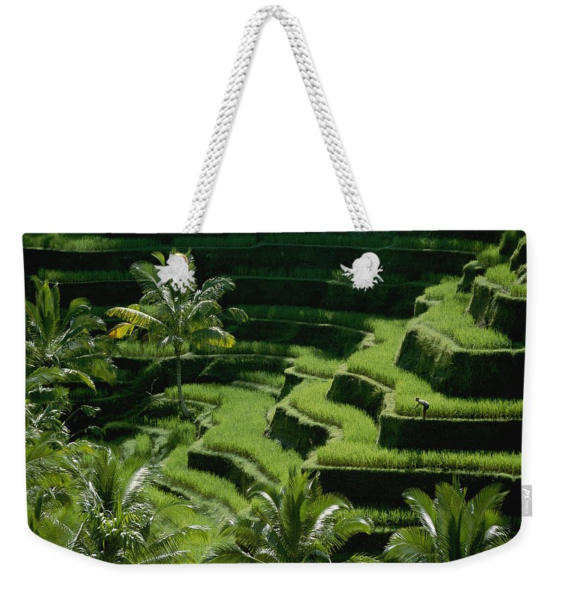 Bali Weekender Tote Bag featuring the photograph Scenic Valleys With Rice Fields In Bali by Paul Chesley