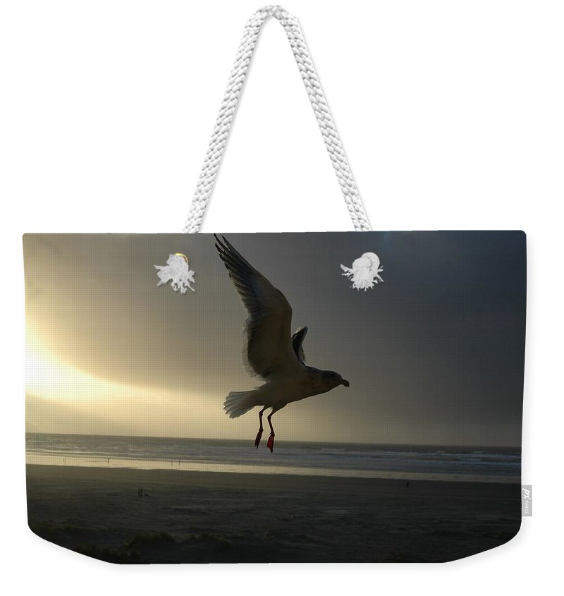 Seagull Weekender Tote Bag featuring the photograph Sea Bird 6 by Sara Stevenson
