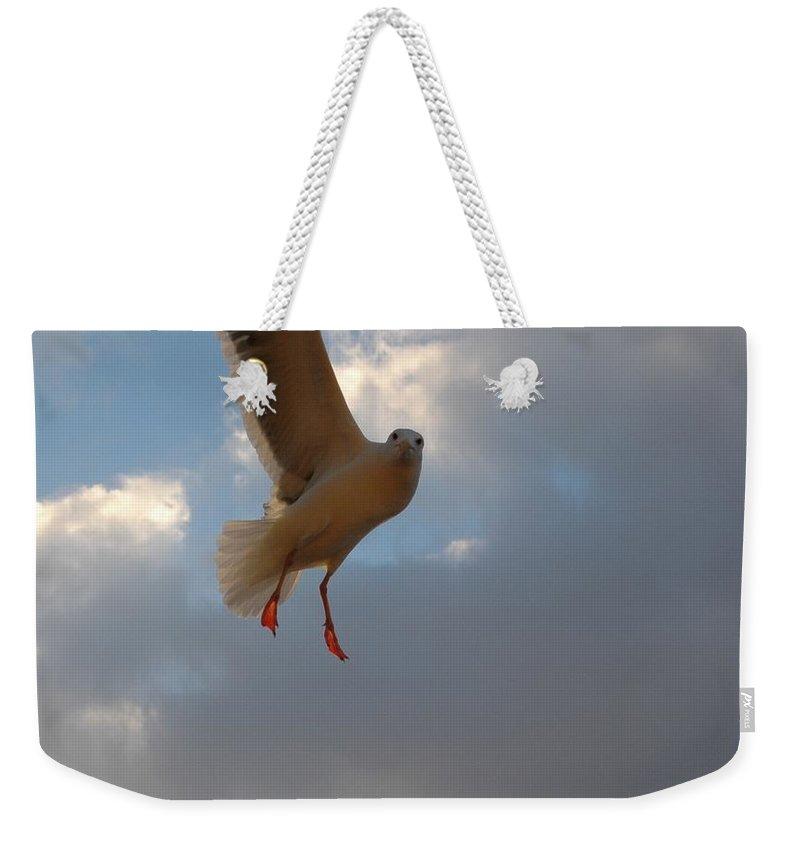 Sea. Ocean Weekender Tote Bag featuring the photograph Sea Birds 13 by Sara Stevenson