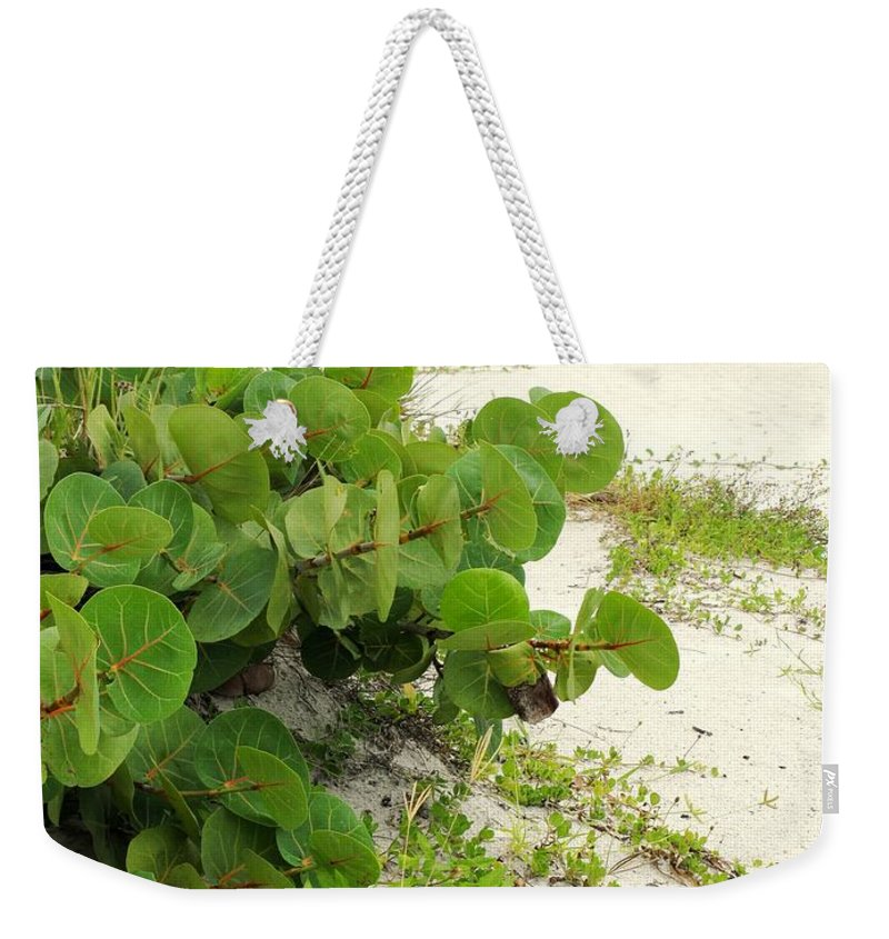 Florida Weekender Tote Bag featuring the photograph Sea Grapes by Ian MacDonald