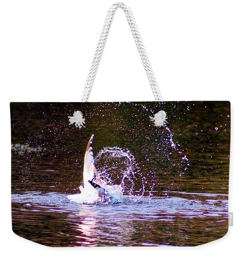 Karen Silvestri Weekender Tote Bag featuring the photograph Sea Gull Abstract by Karen Silvestri