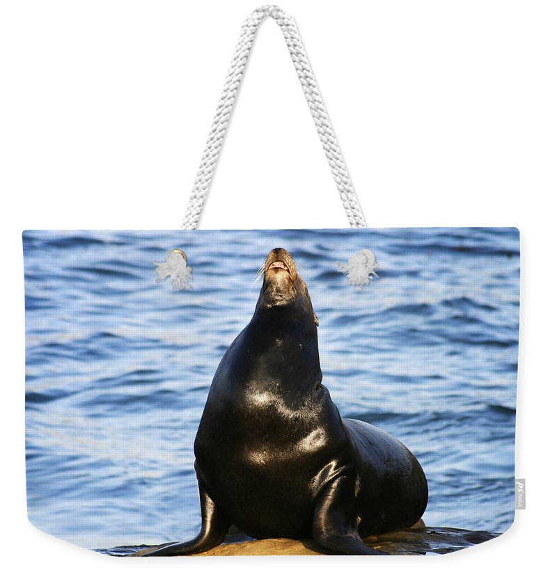 Sea Lion Weekender Tote Bag featuring the photograph Sea Lion Sing by Anthony Jones