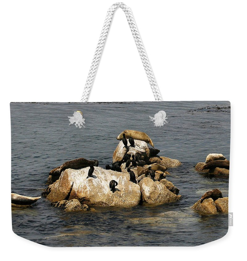Pebble Beach Weekender Tote Bag featuring the photograph Sea Lions And Birds by Marilyn Hunt