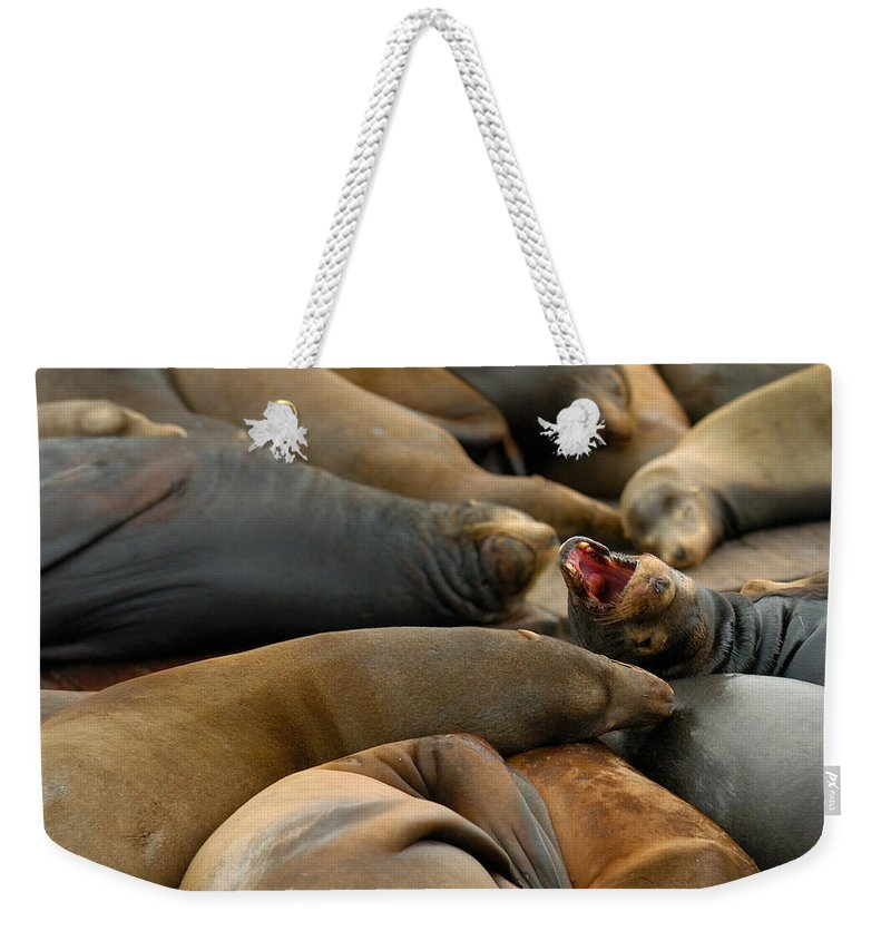 Sea Lions Pier 39 San Francisco Animal Photography Weekender Tote Bag featuring the photograph Sea Lions At Pier 39 San Francisco by Sebastian Musial