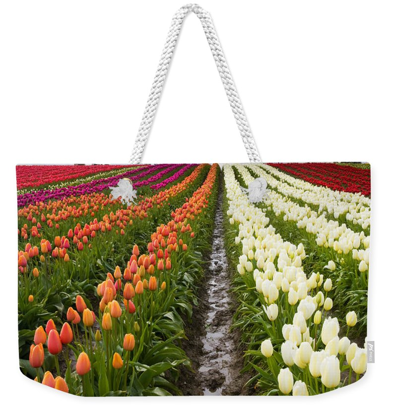 Tulips Weekender Tote Bag featuring the photograph Sea Of Color by Mike Dawson